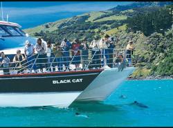 Avia - Akaroa_Harbour_Cruise.jpg