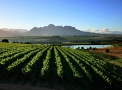 Avia - Cape-Winelands1.jpg