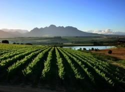 Avia - Cape-Winelands1.jpg