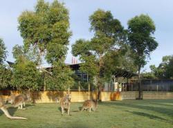 Avia - Caversham_Wildlife_Park_22.jpg