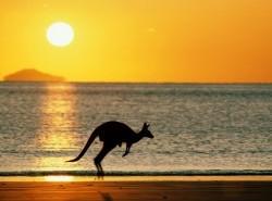 Avia - Kangaroo_14.jpg