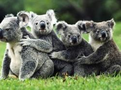 Avia - Koala_31.jpeg
