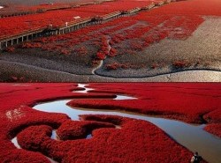 Avia - THE_RED_BEACH_PANJIN1.jpg
