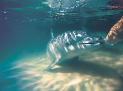 Avia - Tangalooma_Dolphin_144.jpg