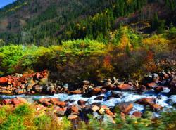 Avia - dagu_glacier_colorful_forest.jpg