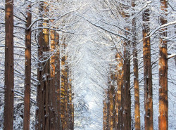 Avia - nami_island_(winter)1.jpg