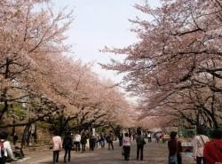 Avia - ueno_park1.jpg