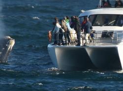 Avia - whale_watching_hermanus.jpg