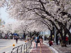 Avia - yeouido_park1.jpg