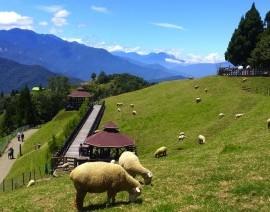 Avia Tour - TAIWAN DISCOVERY CHINGJING FARM