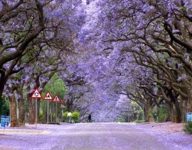 Tour - CHERRY BLOSSOM IN SOUTH AFRICA + WHALE WATCHING