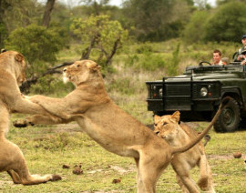 Avia Tour - SOUTH AFRICA WHALE WATCHING + KRUGER NATIONAL PARK