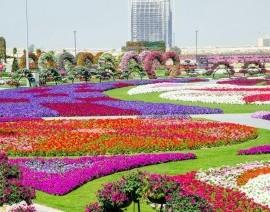 Avia Tour - BEAUTIFUL TURKEY DUBAI + MIRACLE GARDEN (STAY AT GHAYA GRAND HOTEL DUBAI 5* FOR 2 NIGHTS)