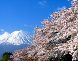 Avia Tour - G-DAY JAPAN SHIRAKAWA-GO SAKURA