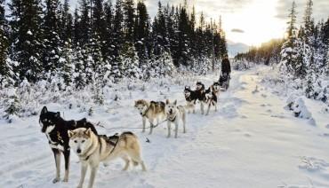 Tour - EAST COAST USA + CANADA & DOG SLED
