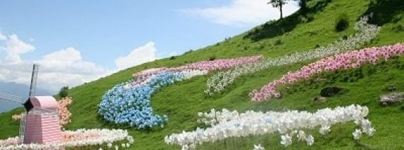 Avia Tour - TAIWAN ALISHAN + CINGJING FARM
