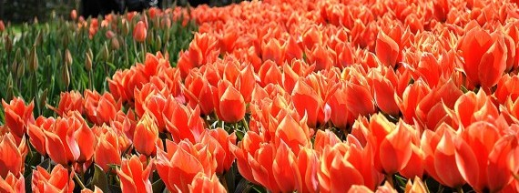 Avia Tour - TULIPA TURKEY + BOSPHORUS CRUISE