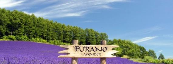 Avia Tour - G-DAY JAPAN HOKKAIDO +  FURANO