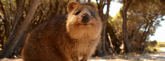 Avia Tour - EXPLORE PERTH FREMANTLE + QUOKKA ROTTNEST ISLAND