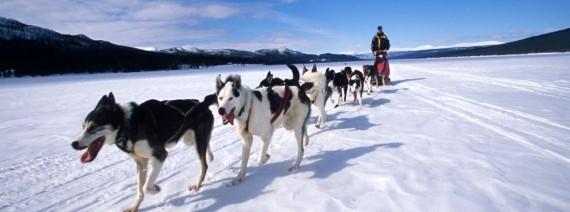 Avia Tour - GDAY MINI KOREA + DOG SLEDDING SNOW