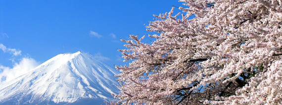 Avia Tour - G-DAY JAPAN SHIRAKAWA-GO SAKURA