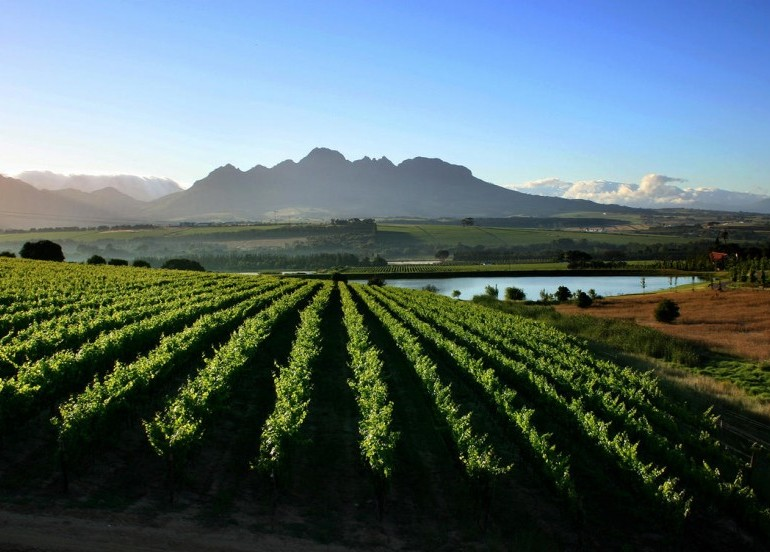 Avia Tour - SOUTH AFRICA CAPE TOWN + WINE TASTING