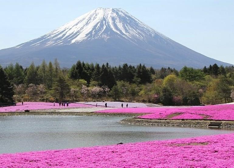 Avia Tour - G-DAY JAPAN ALPIN ROUTE + SHIBAZAKURA