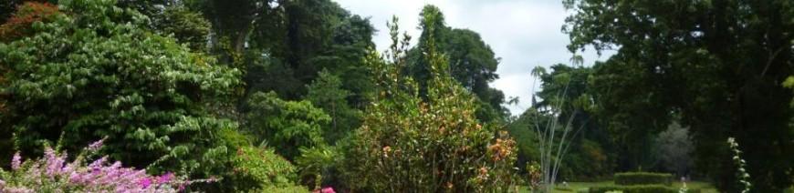 Tour - TASTE OF SRI LANKA