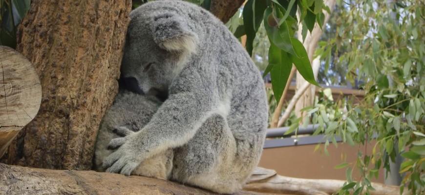 Sydney discount coupons taronga zoo